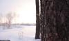 Калашниковские «горы», 9 декабря 2013. Фото: kalashnikovo.ru