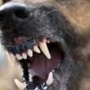 В Спировском районе у собаки выявлен случай бешенства
