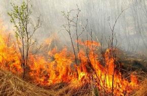 С 1 мая в Тверской области будет введен особый противопожарный режим