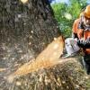 В Спирово строителя оштрафовали на 33 тысячи рублей за самовольную вырубку деревьев