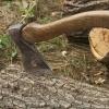 Администрацию Спировского района обязали убрать мусор, оставленный «черными лесорубами»