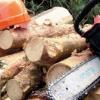 За 9 месяцев в Лихославльском районе выявлено три незаконные вырубки леса на 792071 рублей