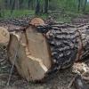 В Тверской области в 1,7 раза сократилось количество незаконных рубок леса