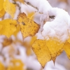 В ближайшие дни центральные районы Тверской области накроет первый снег, ожидается резкое похолодание до -11 градусов