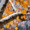 В пятницу в Лихославле будет облачно, временами снег