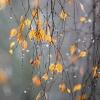 Сегодня в Торжке и Лихославле будет облачно, потеплеет до +9
