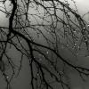 В среду в Торжке и Лихославле будет облачно, возможен дождь