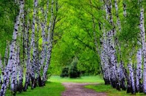 25 апреля в Лихославле будет заложен парк Победы