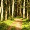 Во всех районах Тверской области снято ограничение посещения лесов