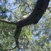 По требованию прокурора энергетики Лихославльского района провели обрезку деревьев