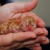В Лихославле две девушки спасли от голодной смерти новорожденного слепого котенка