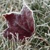 В ближайшие дни в Тверской области возможно похолодание до -3 градусов