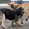 В регионе продолжается отлов безнадзорных животных