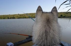 В Лихославле ветеринары вынули из носа овчарки рыболовный крючок