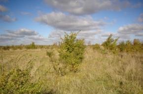 В Лихославльском районе землевладелец оштрафован за зарастающие земли сельхозназначения