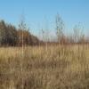 За заросшие поля в Лихославльском районе землевладелец заплатит еще один штраф в размере 110 000 рублей