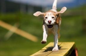 12 июня в Лихославле пройдет дог-шоу «Я и собака моя»
