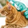 18 и 19 июля в Калашниково будет проводиться бесплатная вакцинация кошек и собак против бешенства