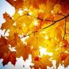 В Калашниково пройдет «Осень золотая»