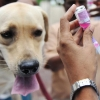 21 и 22 ноября в Калашниково пройдет бесплатная вакцинация собак и кошек против бешенства