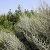 Собственник сельхозземель в Лихославльском районе оштрафован на 110 тысяч рублей за заросли на своих владениях
