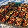 В рамках ответных санкций под Тверью уничтожено более 5 тонн яблок, помидоров, груш и винограда