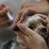19 и 20 января в Калашниково пройдет бесплатная вакцинация собак и кошек против бешенства