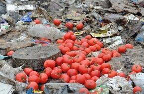 В Тверской области пустили под трактор санкционные помидоры, виноград и груши