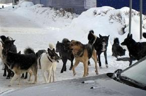 В Торжке будут отловлены 136 безнадзорных животных