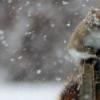 Снежная метель в Тверской области продержится несколько дней