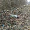 Городской парк и Аллея Памяти в Торжке утопают в мусоре