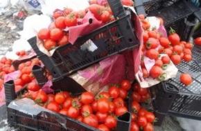 В Твери пустили под трактор 360 килограмм овощей и фруктов