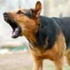 В Твери на детской площадке бродячая собака напала на 8-летнюю девочку