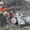 В Тверской области спиленная береза насмерть придавила лесоруба