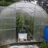 Житель Лихославльского района в теплице в горшках и кастрюлях выращивал коноплю (фото)