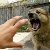 В Спирово бродячие собаки загрызли 13 индюков, 10 кур и 1 петуха