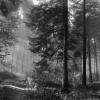Пропавшего в лесу жителя Лихославльского района нашли мертвым