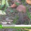 Лихославль присоединился к областному массовому субботнику по уборке территорий (видео)
