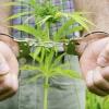 В Лихославле поймали торговца наркотиками