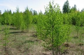 В Торжокском районе обнаружилось 480 гектар зарастающих сельскохозяйственных земель