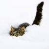 Снегопад в Тверской области продлится до утра