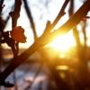 В Тверской области ожидается резкое потепление до +20 градусов