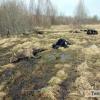 Следственный комитет возбудил уголовное дело в отношении директора «Аграрной фирмы «Трудовик» из-за смерти 43 коров