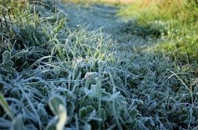 Метеорологи предупредили о возможных заморозках до -2 градусов