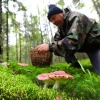 Россиянам позволят свободно собирать ягоды и грибы