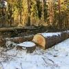 В Спирово «черные лесорубы» поплатились за незаконную заготовку дров