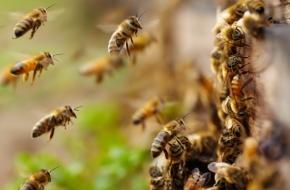 Пчеловодов Лихославльского района предупредили о возможной опасности