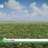 «Тверь Агропром» расширяет ассортимент культур, вводит новые земли в оборот и готовится к уборке урожая (видео)
