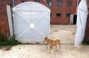 В Тверской области собака загрызла 4-летнюю девочку