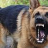 В Твери стая бродячих собак напала на мать с 4-летней дочерью